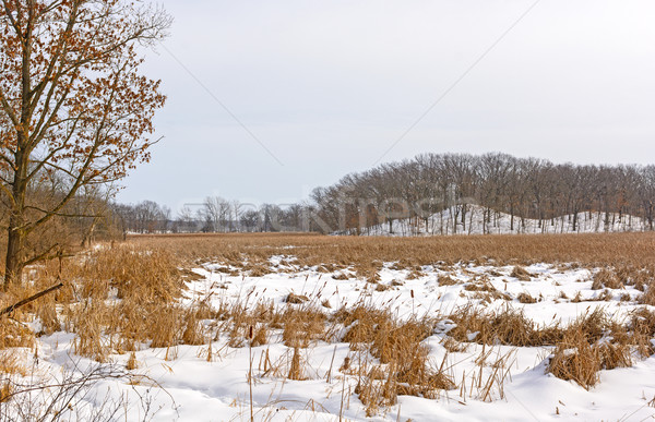 Marshland and Hills in Winter Colors Stock photo © wildnerdpix