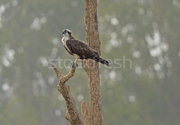 Bakıyor balık nehir park Hindistan doğa Stok fotoğraf © wildnerdpix