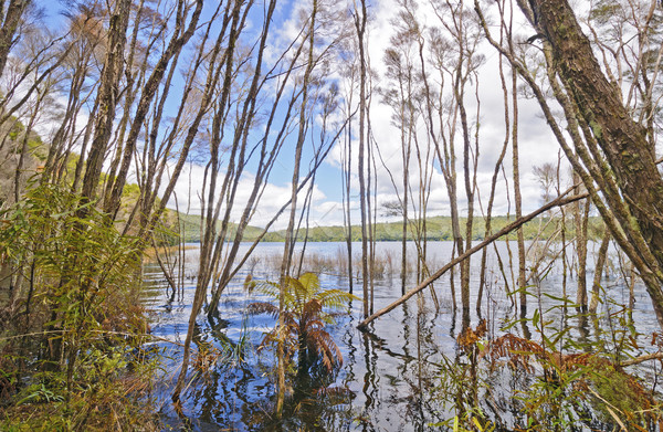 Flooded Shores on a Forested Lake Stock photo © wildnerdpix