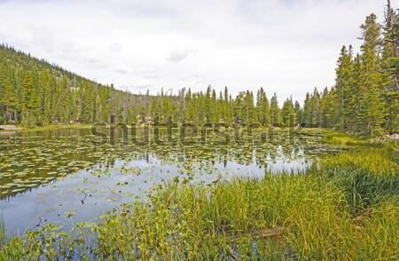 Su lilyum dağ göl park Colorado Stok fotoğraf © wildnerdpix