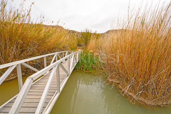 Footbridge across a Wetland Pond Stock photo © wildnerdpix
