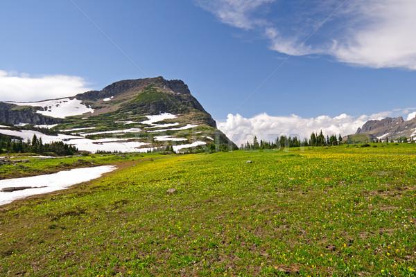 High Alpine Meadow in the Summer Stock photo © wildnerdpix