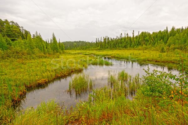 Csendes patak észak erdő park Ontario Stock fotó © wildnerdpix