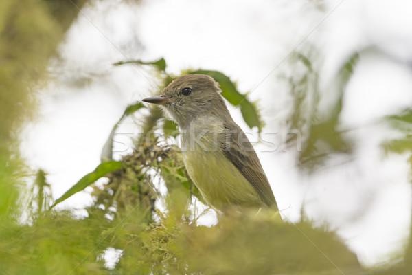 Boom eiland natuur vogel biologie Stockfoto © wildnerdpix