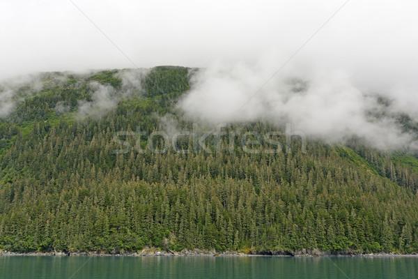 Sahil rainforest prens ses Alaska buğu Stok fotoğraf © wildnerdpix