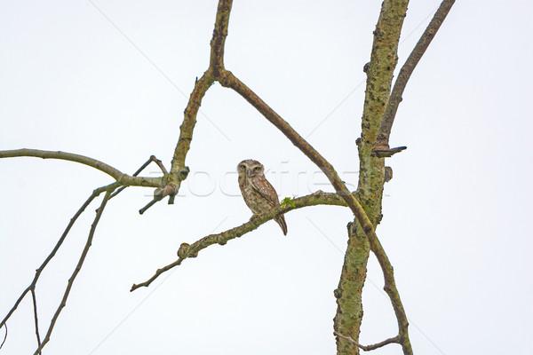 Ağaç park Hindistan doğa kuş Asya Stok fotoğraf © wildnerdpix