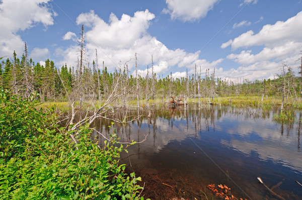 Bog Lake in the Wilderness Stock photo © wildnerdpix