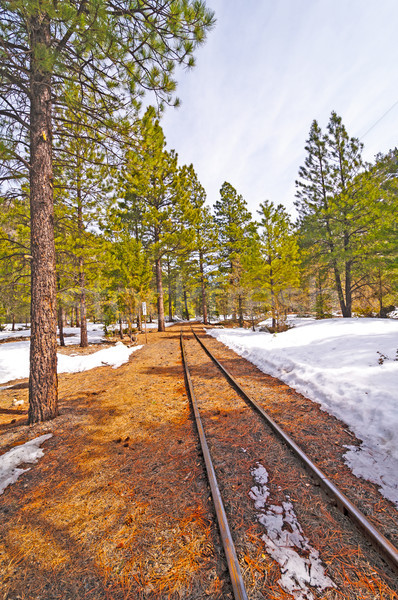 Rail Siding into the Snow and Trees Stock photo © wildnerdpix