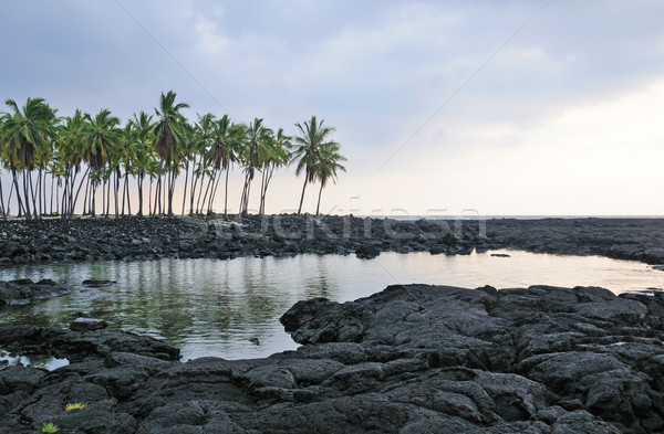 Lava and Palm trees on the ocean Stock photo © wildnerdpix