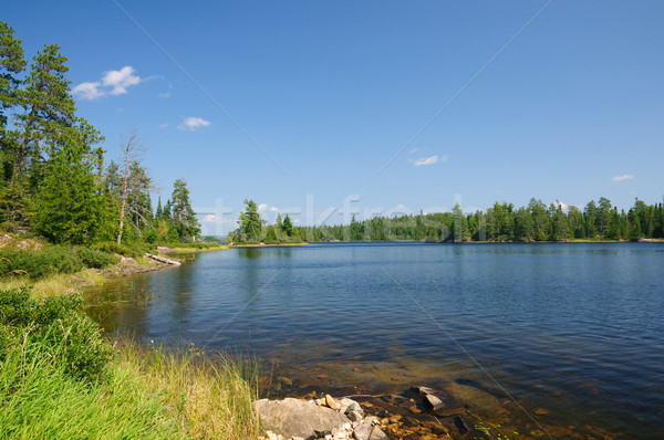 Stock photo: Summer in The North Woods