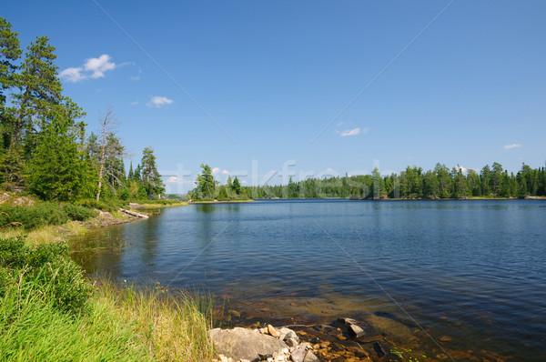 Summer in The North Woods Stock photo © wildnerdpix