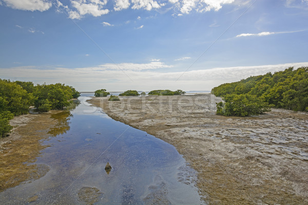 Sub-Tropical Stream entering into an ocean bay at Low Tide Stock photo © wildnerdpix