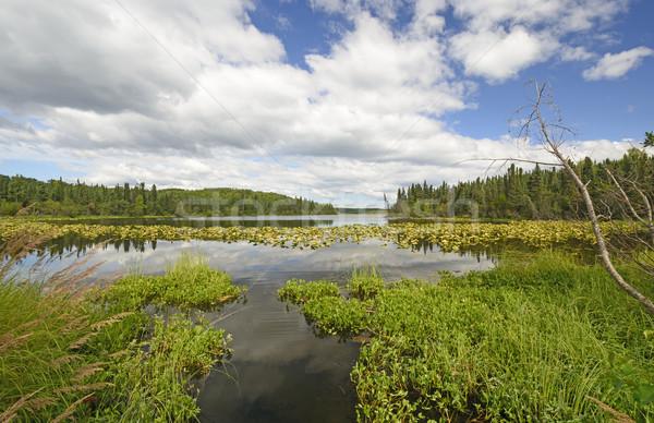 Smal kanaal wildernis meer sparren wildlife Stockfoto © wildnerdpix
