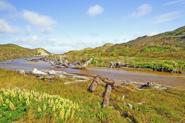 Stream sabbia anatra torrente muratore isola Foto d'archivio © wildnerdpix
