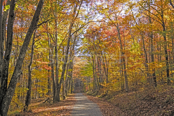 Shaded Path in the Forest in Autumn Stock photo © wildnerdpix