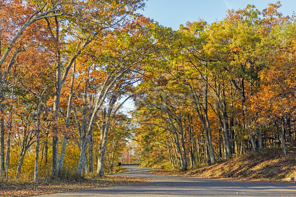 Rural Road in the Fall Stock photo © wildnerdpix