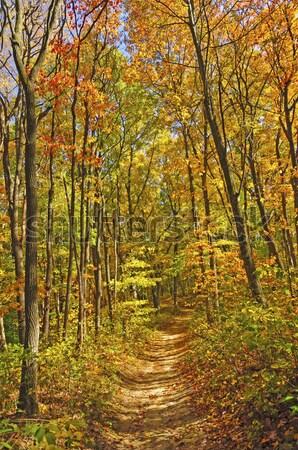 Rural route automne jour colonne vertébrale parc Photo stock © wildnerdpix