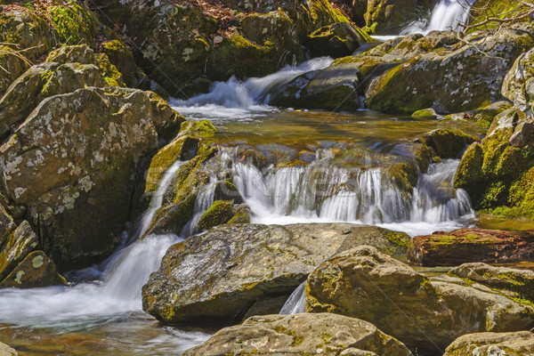 Stock photo: Quiet Water in a Mountain Stream