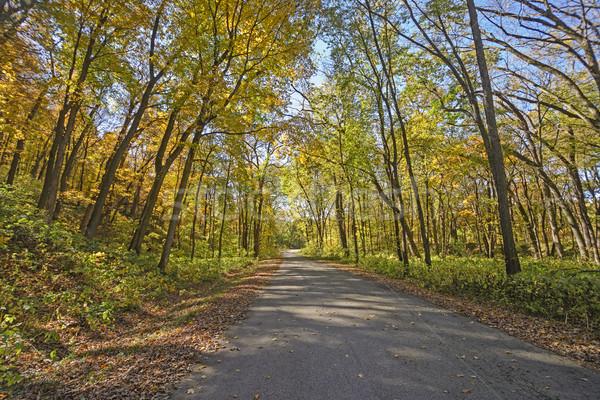 Landelijk weg vallen park Wisconsin landschap Stockfoto © wildnerdpix