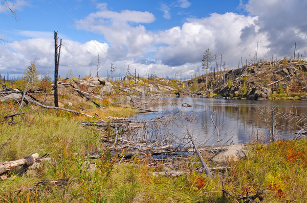 Brand wildernis meer grens holte Stockfoto © wildnerdpix
