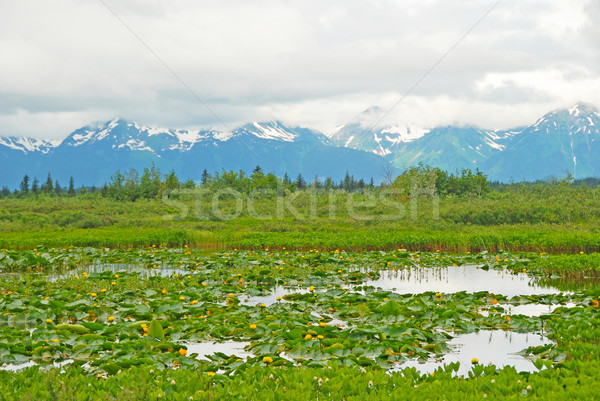 Water Lilies in a Mountain Valley Stock photo © wildnerdpix