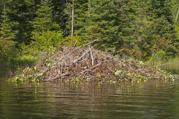 Beaver Lodge on a Wilderness River Stock photo © wildnerdpix