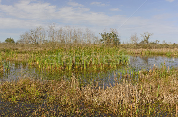 Wetland Pond in the Bayou Stock photo © wildnerdpix