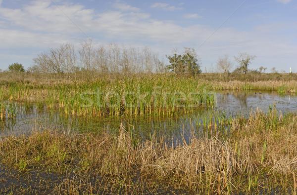 Stagno prateria fauna selvatica acqua natura panorama Foto d'archivio © wildnerdpix