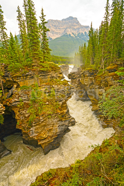Raging Waters in a Mountain River Stock photo © wildnerdpix