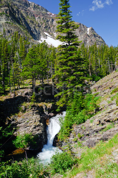 Mountains, Falls and Pines in the American West Stock photo © wildnerdpix