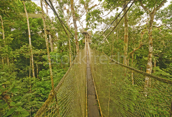 Stock photo: Canopy Walkway in the Rain Forest