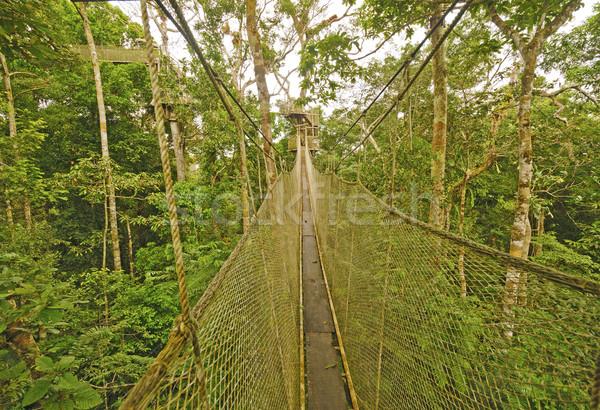 Canopy Walkway in the Rain Forest Stock photo © wildnerdpix