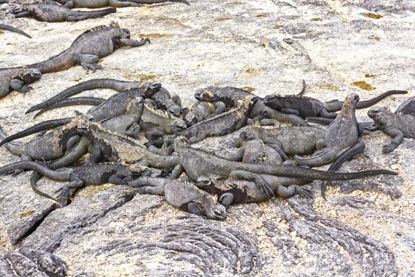 Groep mariene wal eiland natuur dier Stockfoto © wildnerdpix