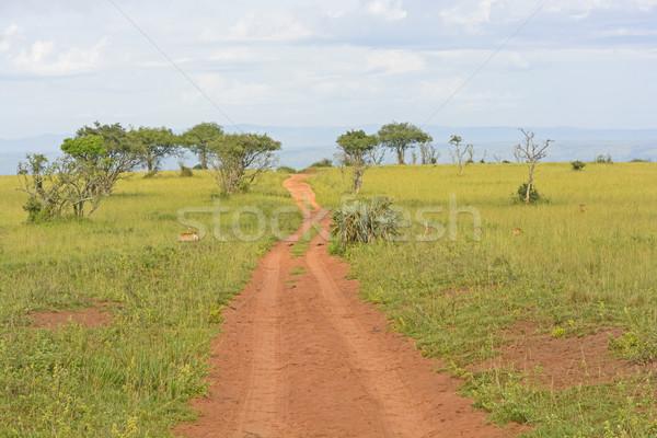 сельский дороги африканских парка Уганда Африка Сток-фото © wildnerdpix
