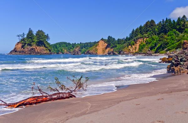 California coastal beach in Summer Stock photo © wildnerdpix
