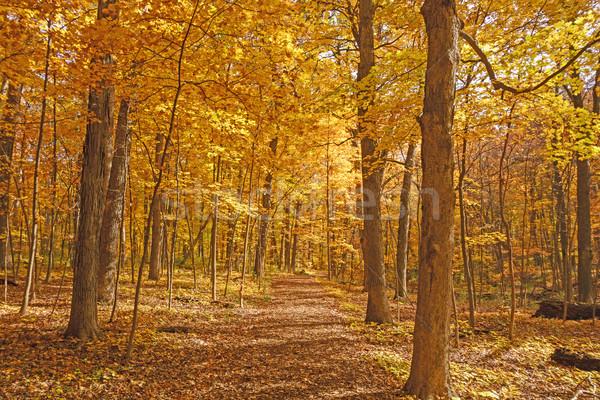 Amarelo caminho cair floresta natureza paisagem Foto stock © wildnerdpix