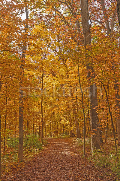 Quiet Trail in the Fall Stock photo © wildnerdpix