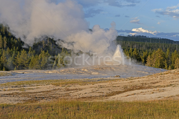 Geyser Erupting at Sunset Stock photo © wildnerdpix