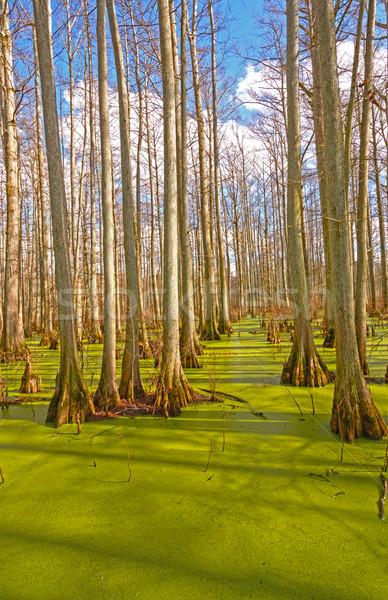 Pântano sol garça-real lagoa rio Foto stock © wildnerdpix