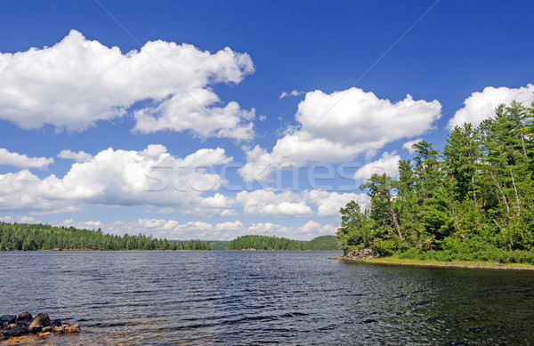 Sunny Summer Day in Canoe Country Stock photo © wildnerdpix
