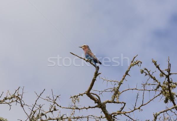 Afrika göl park Uganda doğa kuş Stok fotoğraf © wildnerdpix