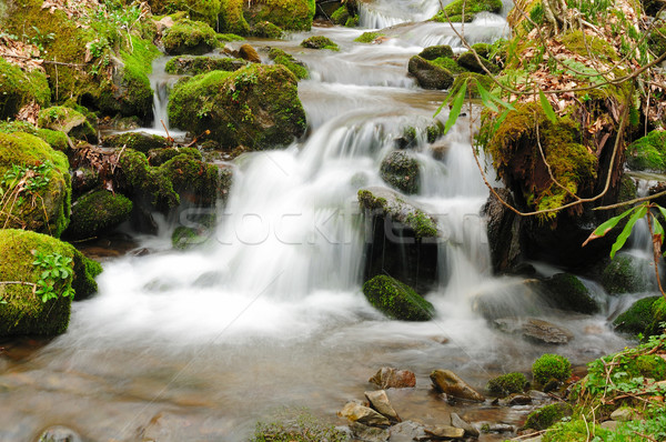 Mountain creek in the early spring Stock photo © wildnerdpix