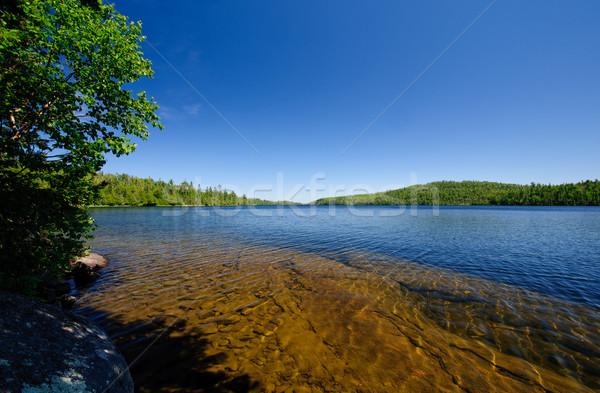 Blue skies over the North Woods Stock photo © wildnerdpix