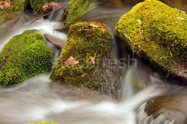 Moss and Rocks in a Mountain Stream Stock photo © wildnerdpix