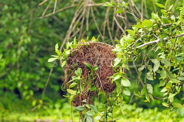 細部 鳥の巣 雨林 ツリー アマゾン かなり ストックフォト © wildnerdpix