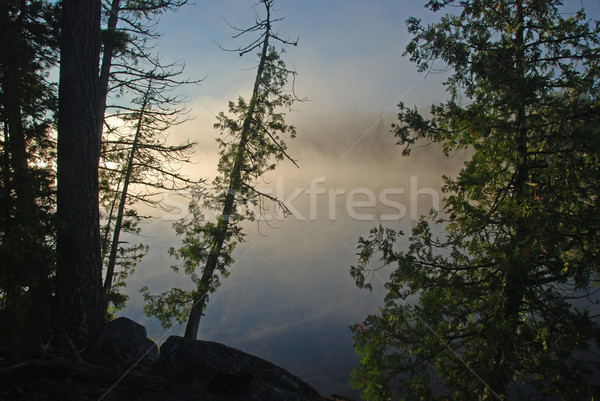 Misty Sunrise in the Wilderness Stock photo © wildnerdpix