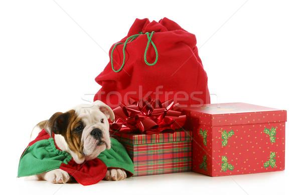 christmas puppy Stock photo © willeecole
