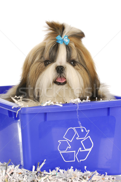 puppy in recycle bin Stock photo © willeecole