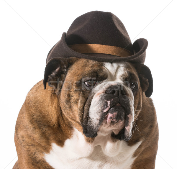 Stock photo: country dog