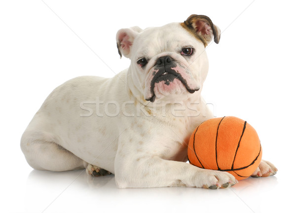 dog with ball Stock photo © willeecole